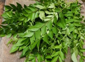 10 Health Benefits of Curry Leaves and Medicinal Use