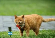 Predicted Outcomes- China's Cat That Correctly Predicted Nigeria-Argentina Match Dies