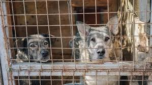 Largest Dog Meat Slaughter House Closed In South Korea